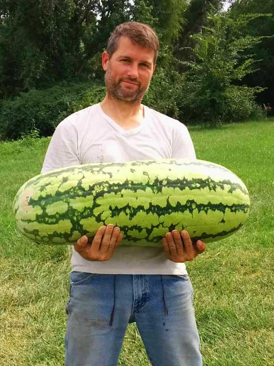 Pauly's 50 lb. Watermelon