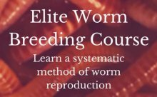 Elite Worm Breeding Course