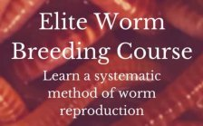 Elite Worm Breeding Course