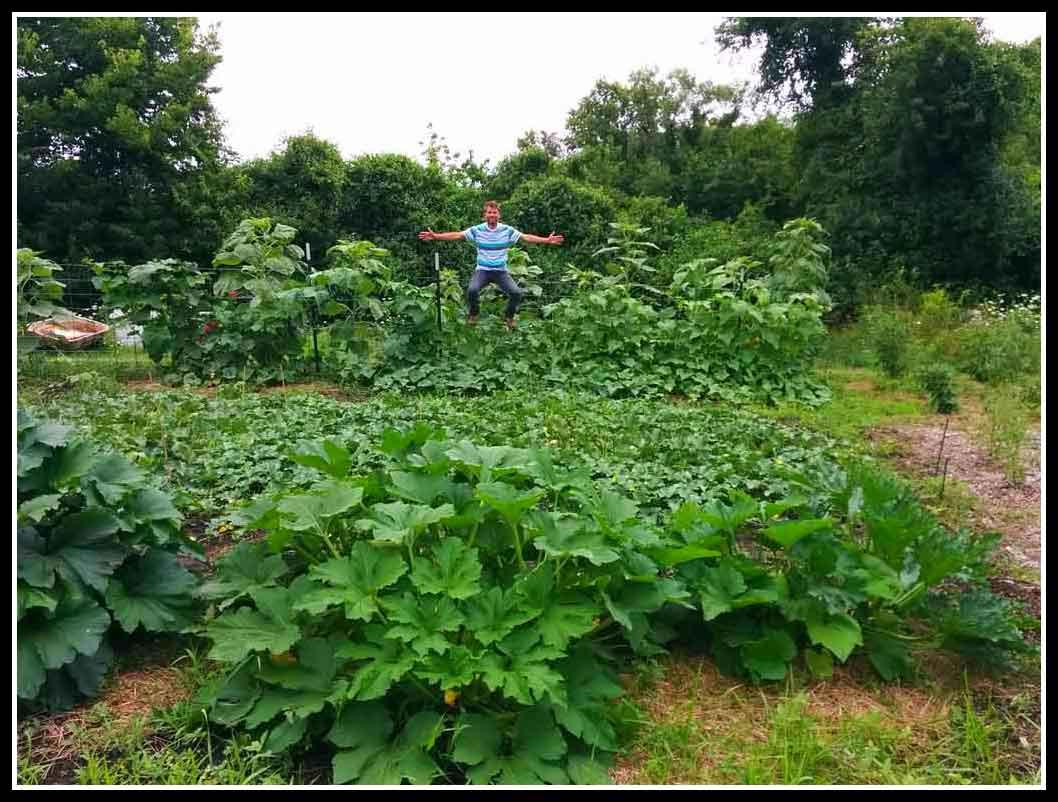 Worm Farming Garden Pics