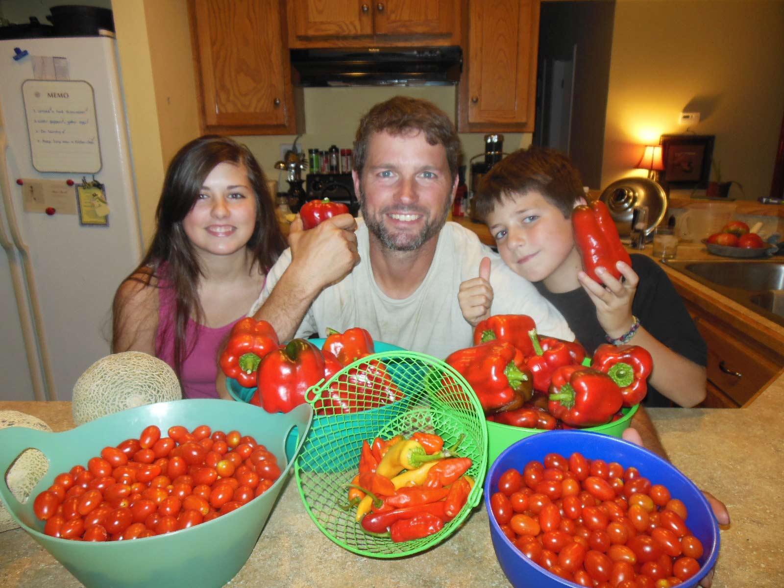 Pepper tomato harvest 2013