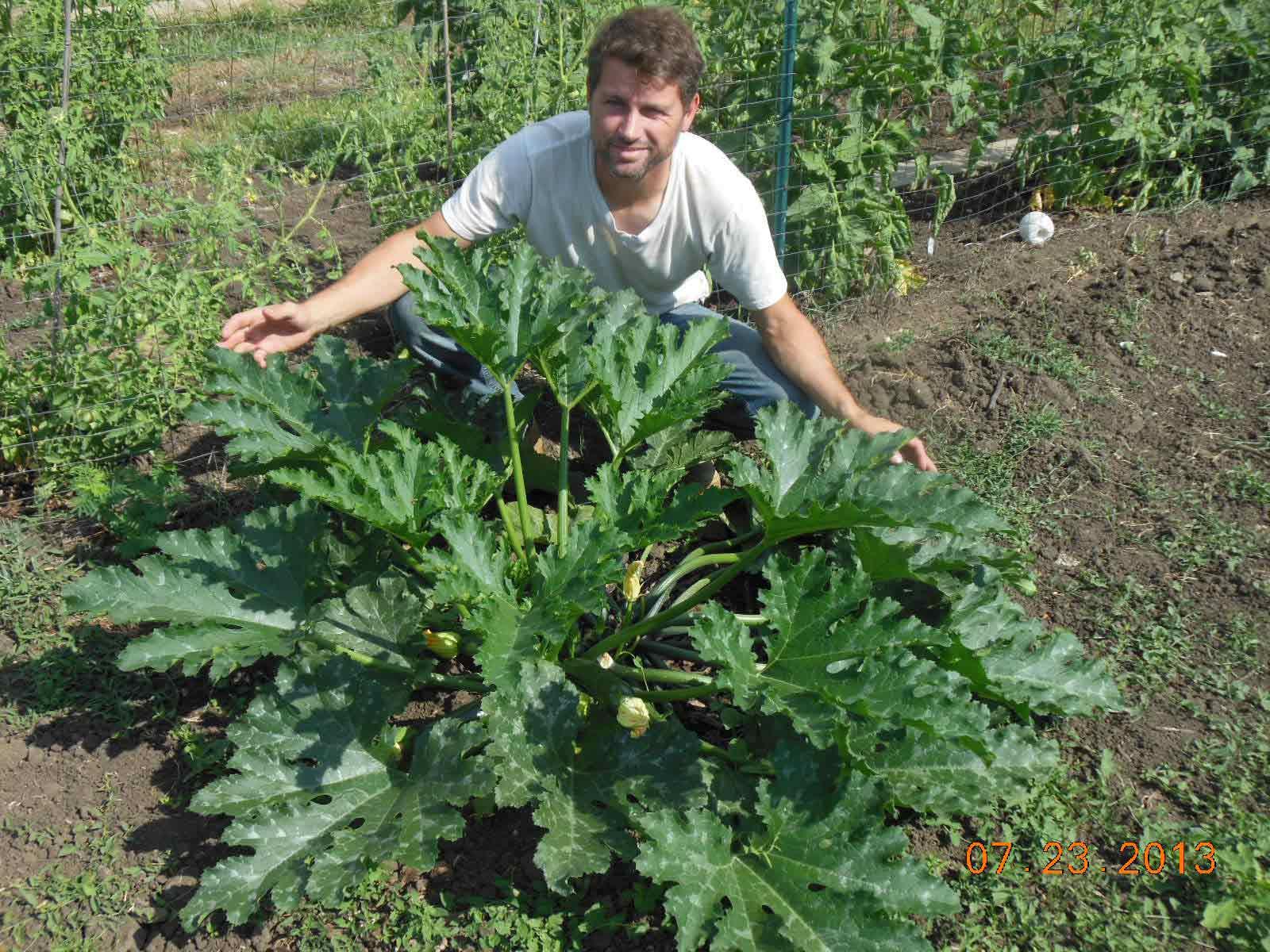 Zucchini late start 2013