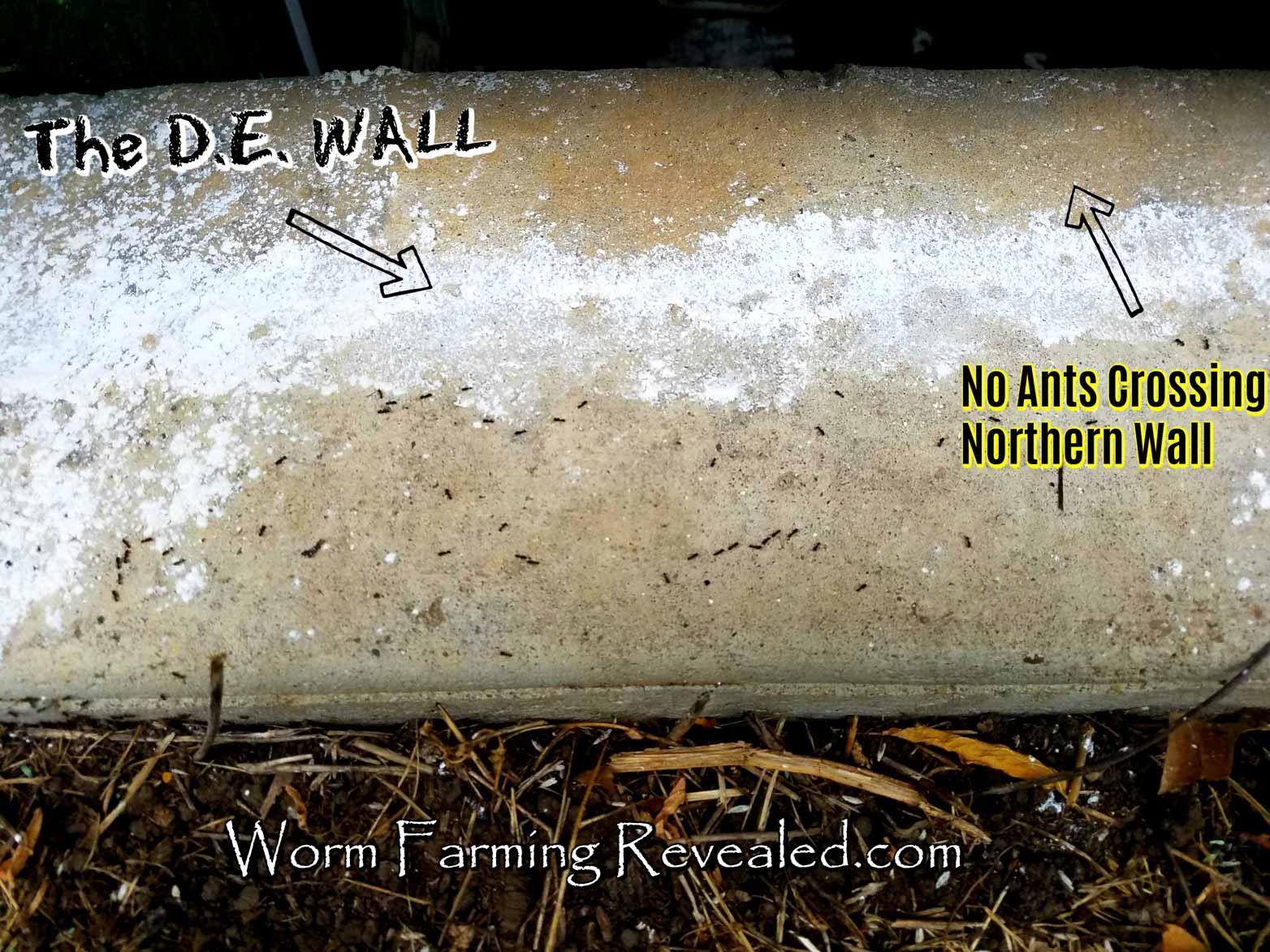 Ants Not Crossing DE Wall