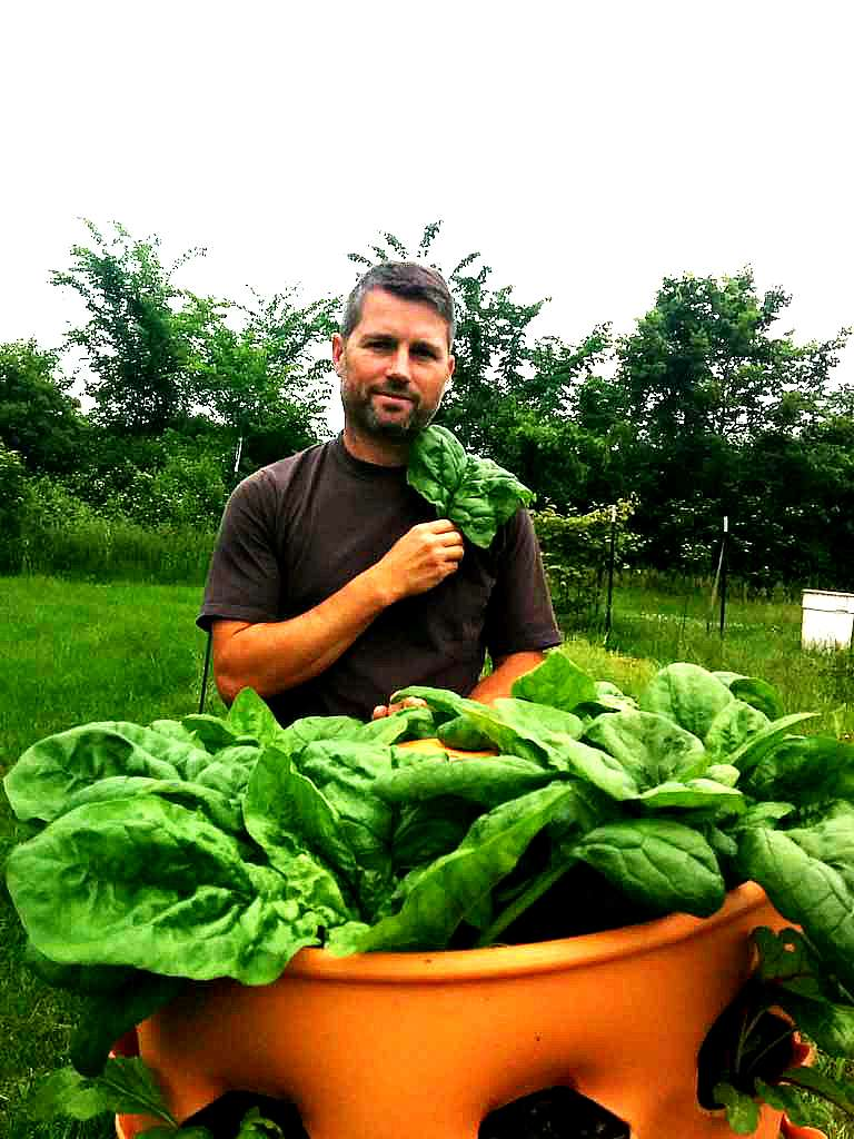 Spinach Grown from the Garden Tower