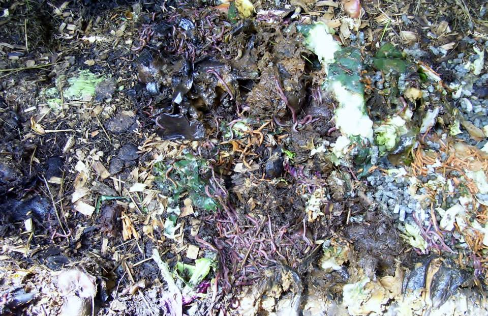 Roberts Flow Through Outdoor Vermicompost SystemPic 0007