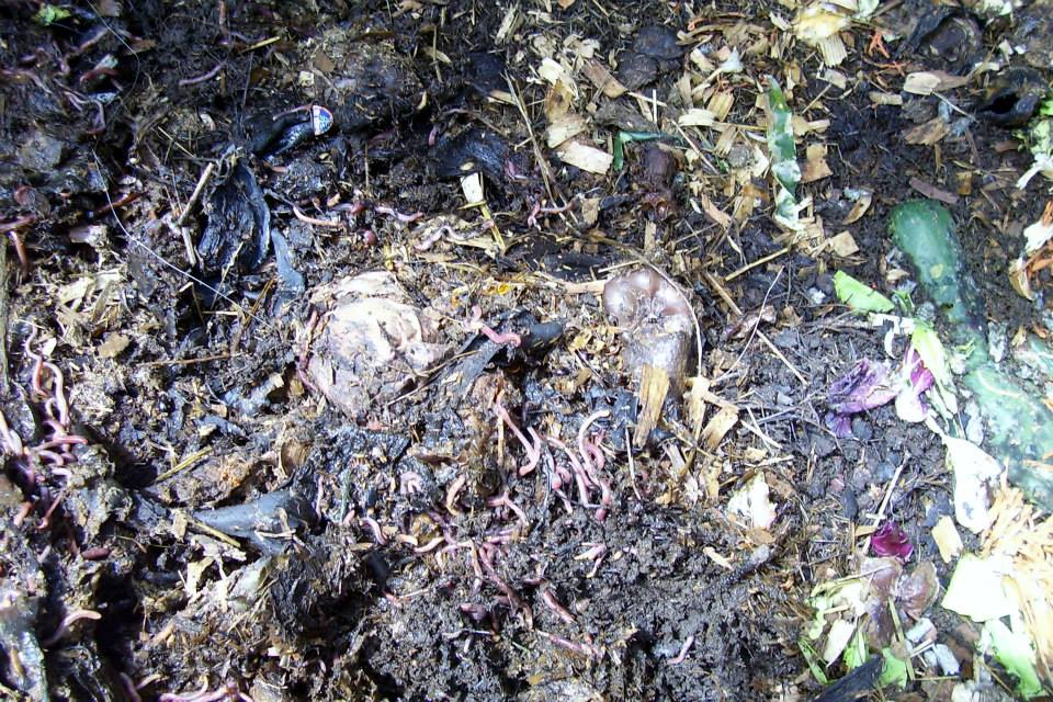 Roberts Flow Through Outdoor Vermicompost SystemPic 0007a