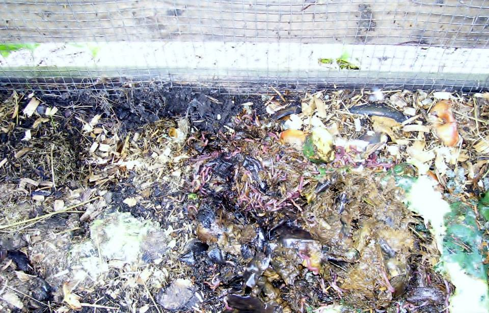 Roberts Flow Through Outdoor Vermicompost SystemPic 0009