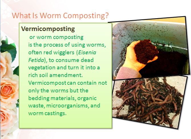 The Worm Farming Presentation Slide 4