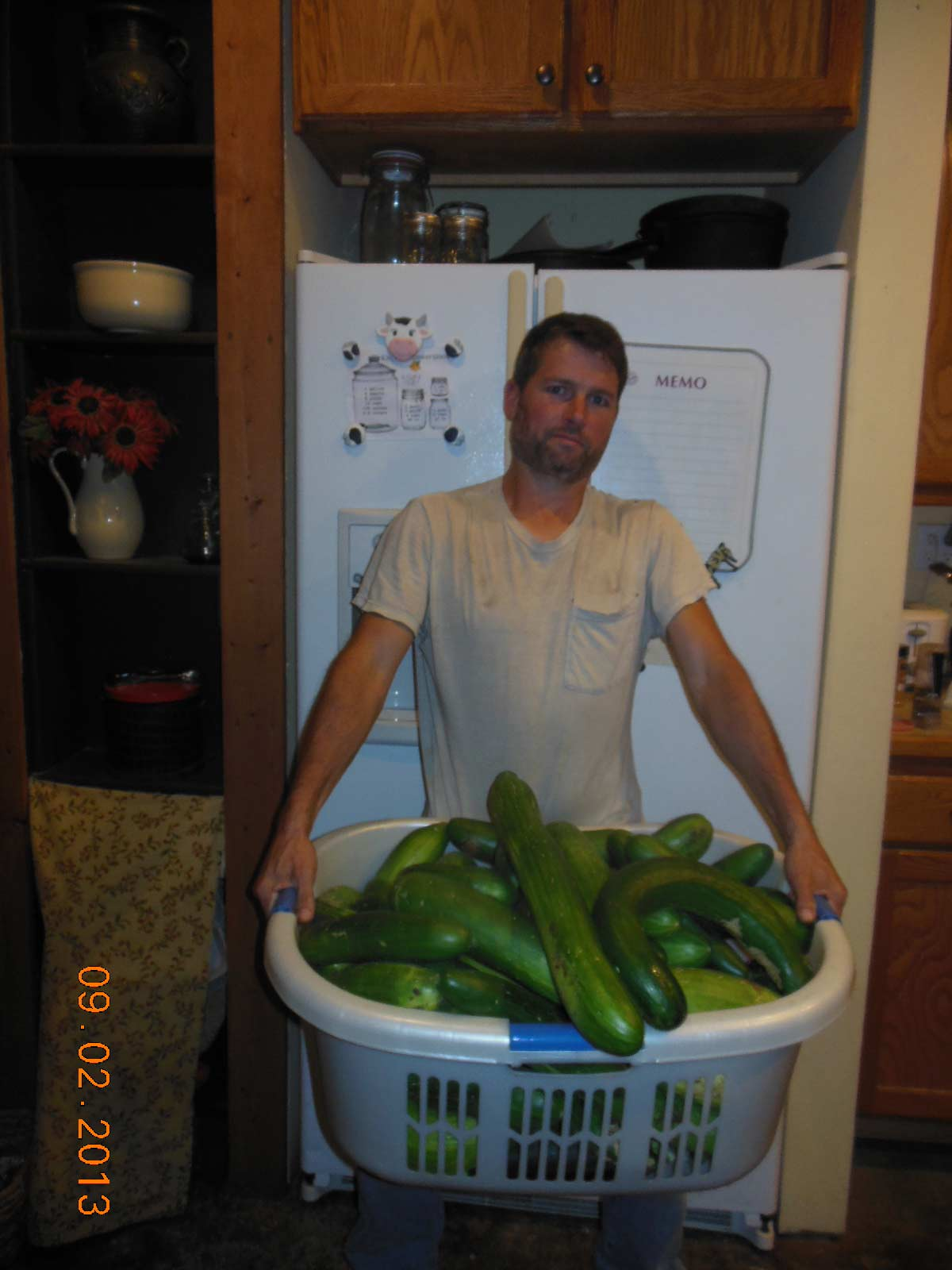 Another small cucumber harvest 2013
