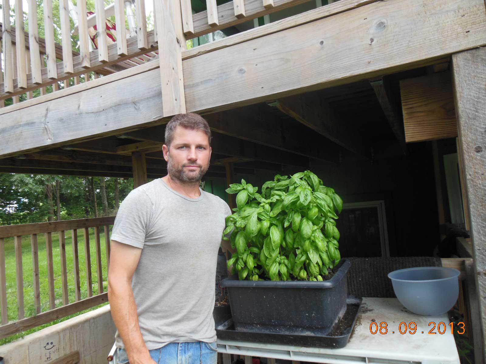Basil growing in the urbin grower