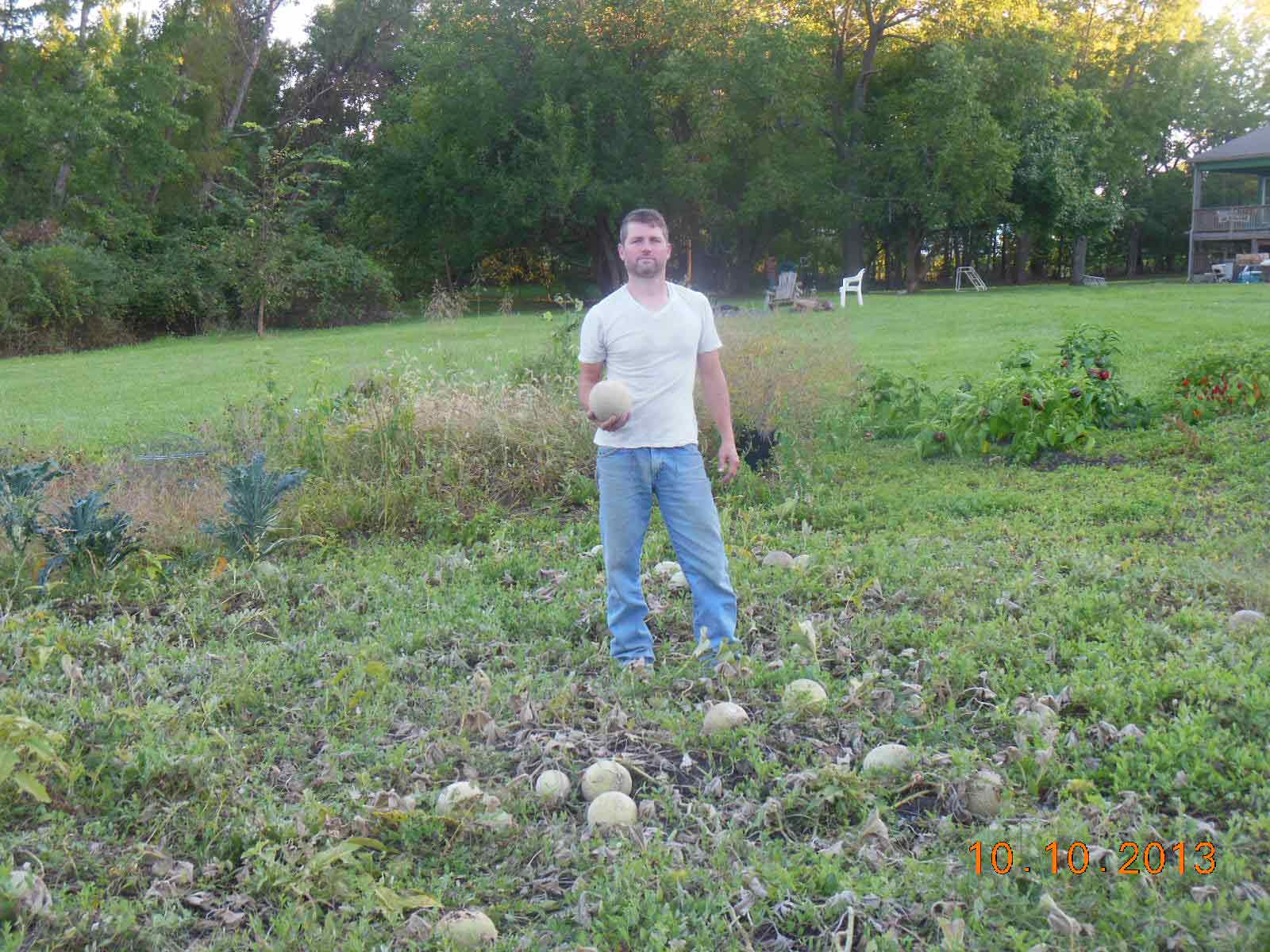 Cantaloupe harvest 2013