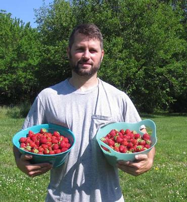 Second strawberry harvest of 2010