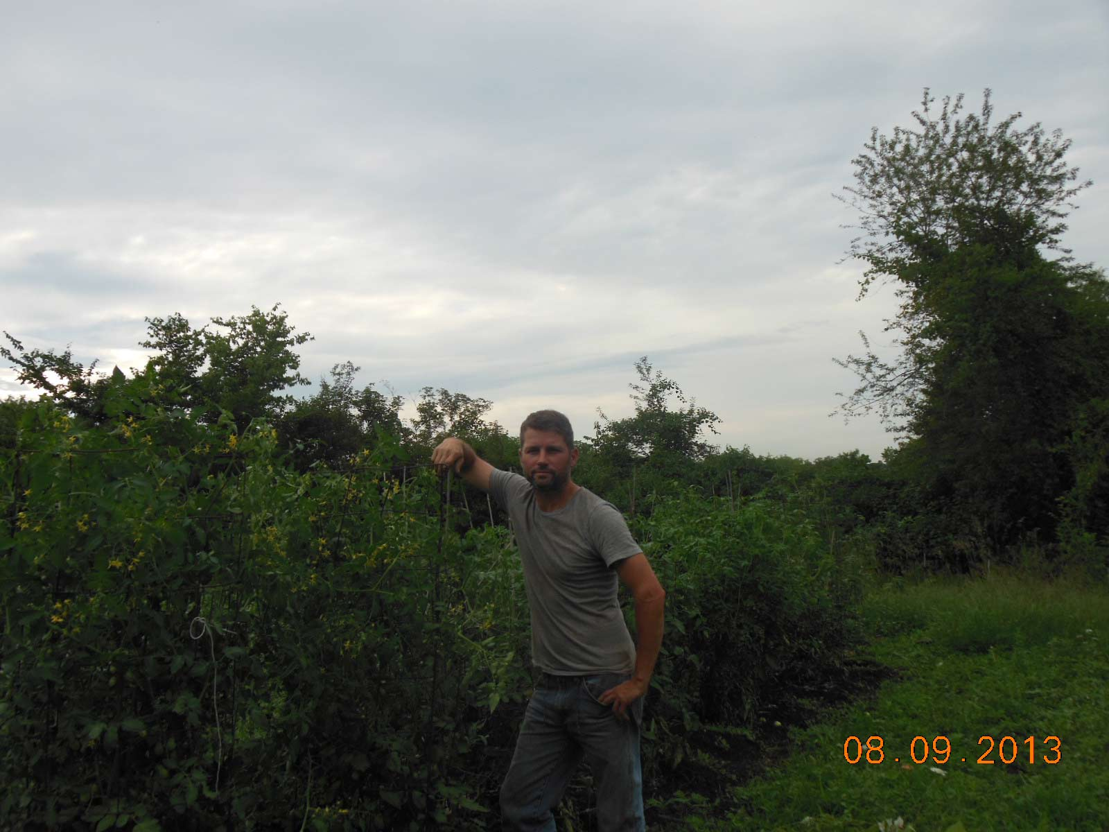 Tomato rows in August getting nice and tall