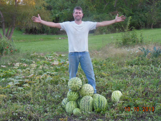Watermelon harvest 2013