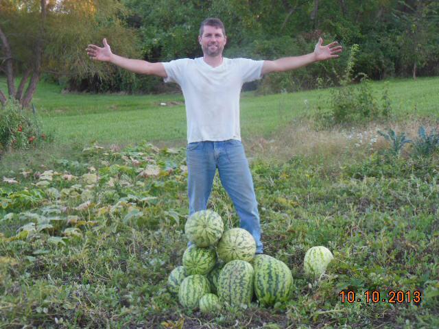 Watermelon harvest 2013