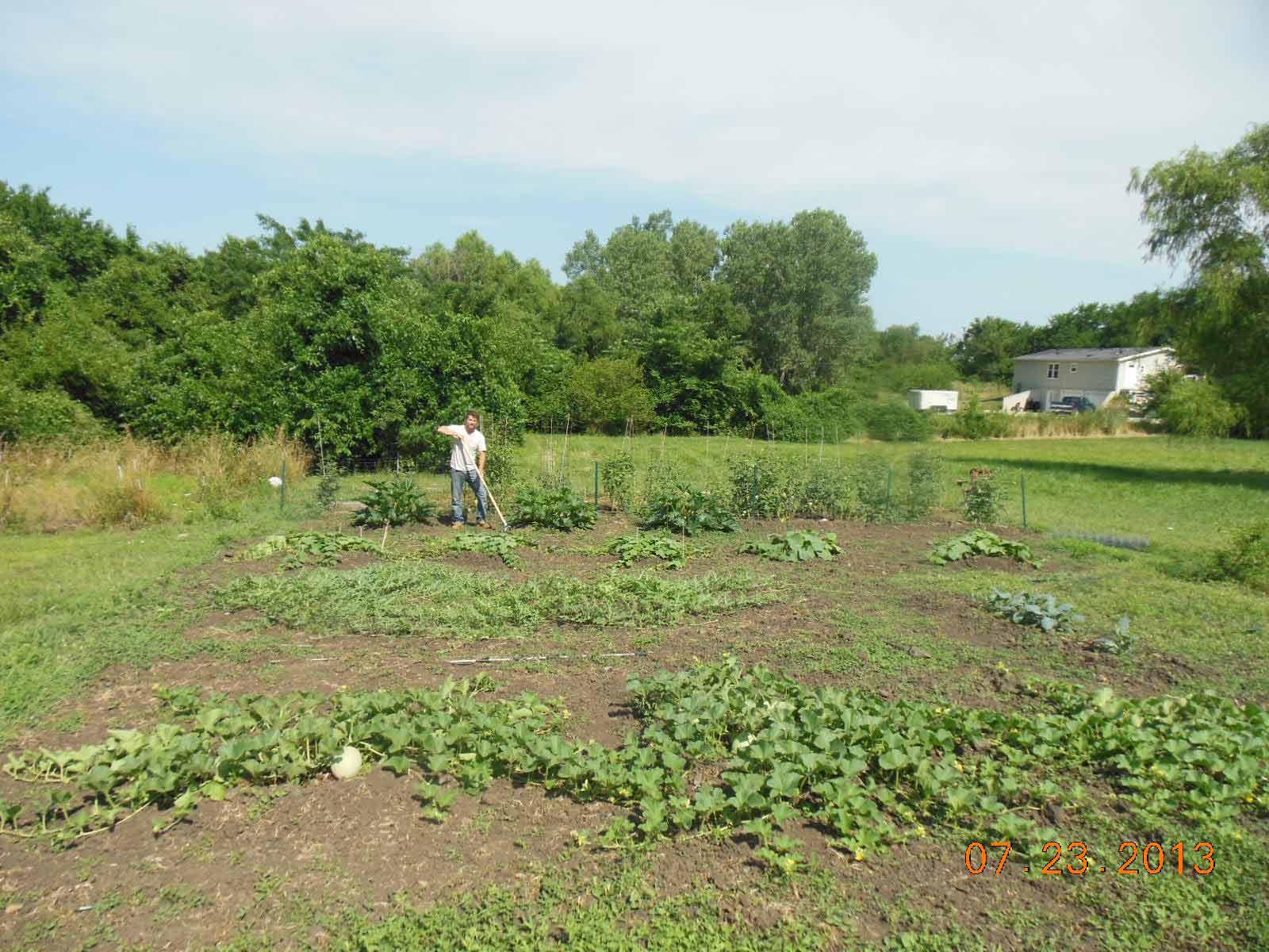 Worm farming revealed garden in July 2013-1