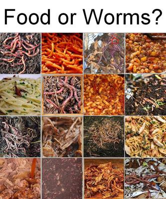 Food or Worms?