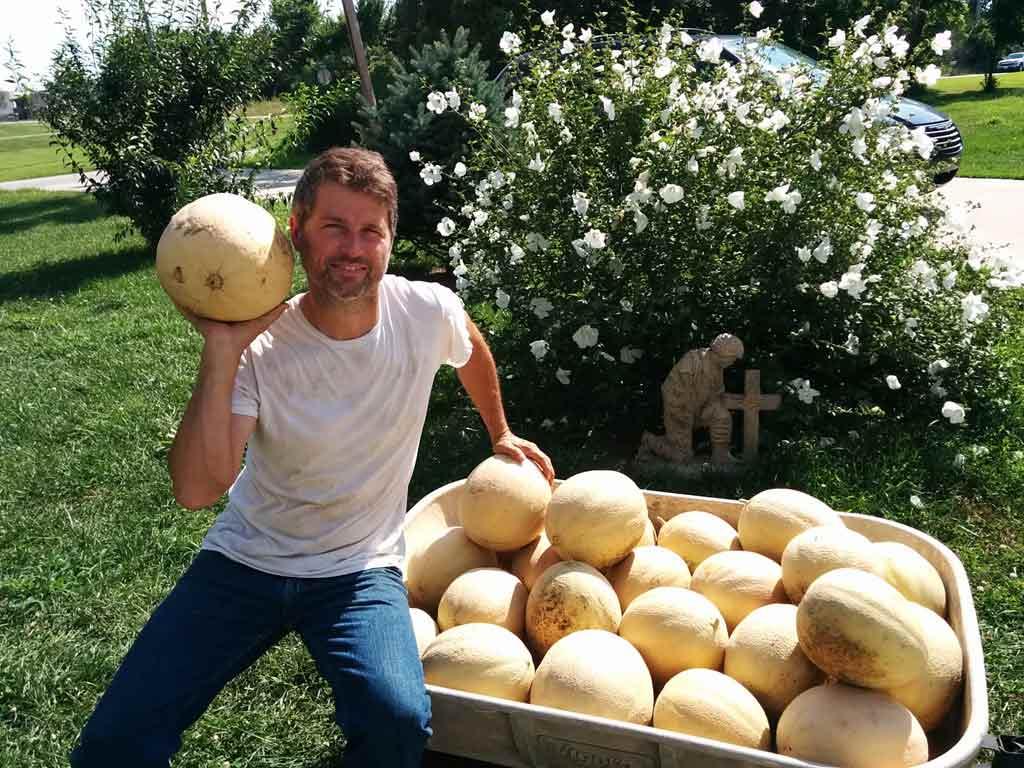 Just One Cantaloupe Harvest